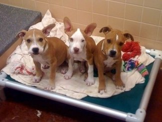 ASPCA partners with DogTime to list adoptable animals on their website