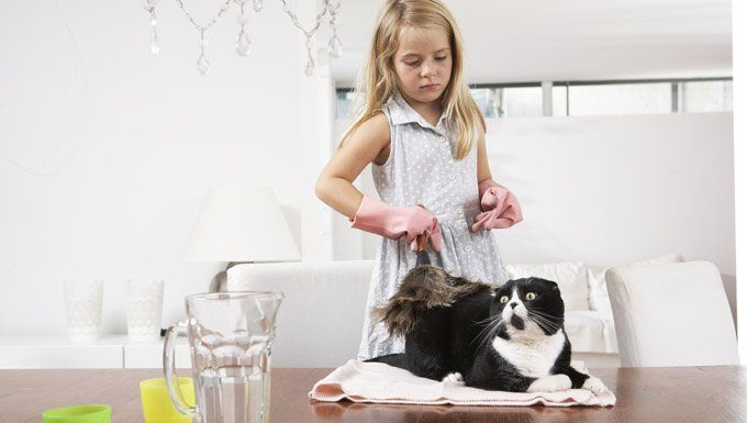little girl dusting a cat