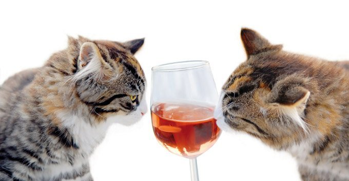 cats-alcohol-toxic