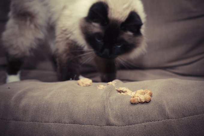 how to help cat throw up hairball