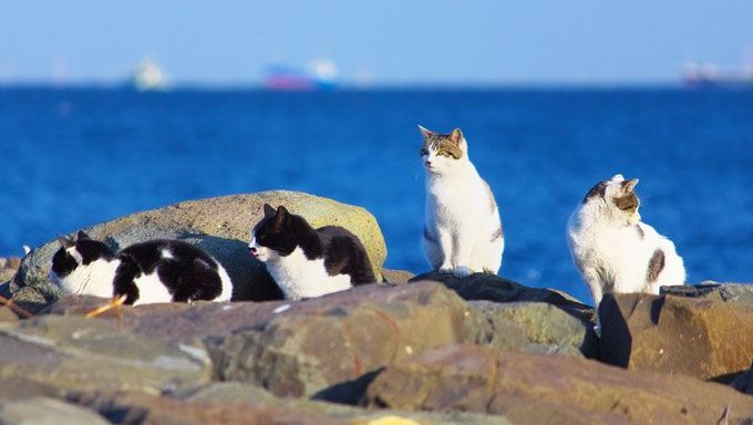 feral cats sitting on rocks by the ocean