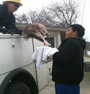 Cat rescued from top of electrical pole