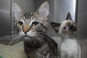 Three charged in alleged cat-hoarding incident