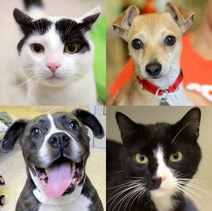 NYC residents can help a dog or cat graduate
