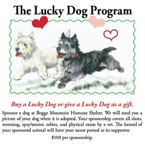 """Boggs Mountain: Where are the """"Lucky"""" dogs and cats?"""