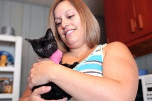 Cat goes for 100-mile ride, gets adopted