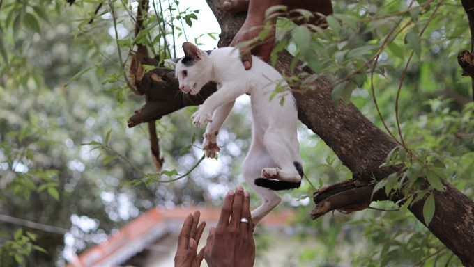 People rescuing cat from tree