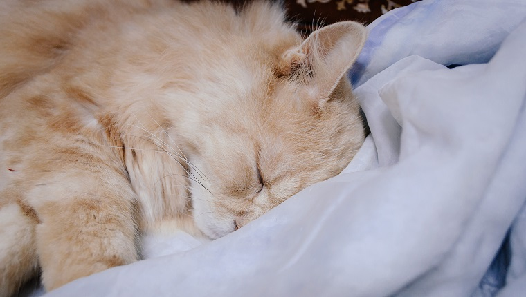 Cat is sleeping in the midnight