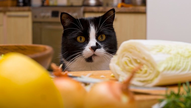 cat looking at the table with food in the kitchen