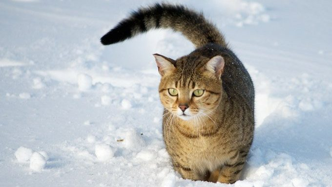 Hypothermia In Cats Symptoms And What To Do Cattime