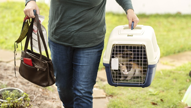 Close-up of a woman carrying home two adorable adopted kittens in a pet carrier