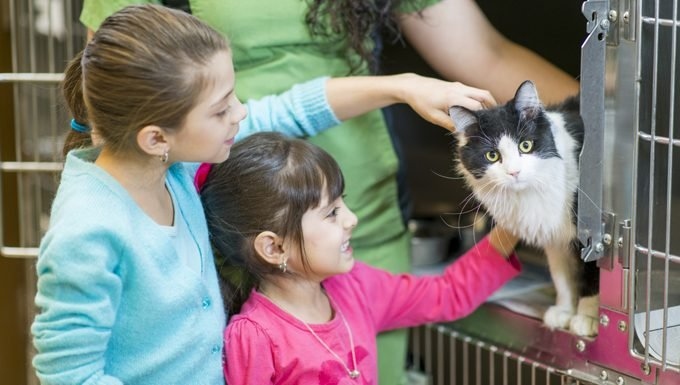 kids pet cat at a shelter