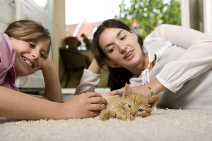 More often than not, a victim of domestic violence will stay in an abusive relationship for fear of what will happen to the pets if they leave. (Picture Credit: Getty Images)