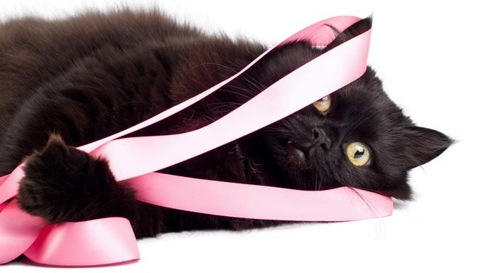 cat wrapped in pink ribbon