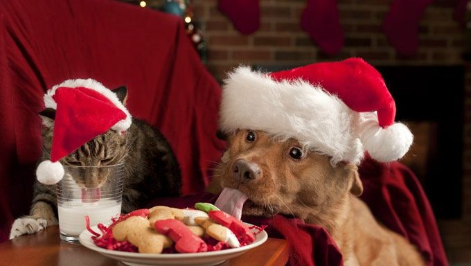 cat and dog eat christmas cookies and milk
