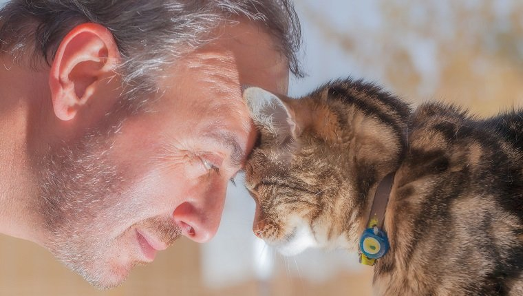 man and old cat: real love - have faith in / trusting