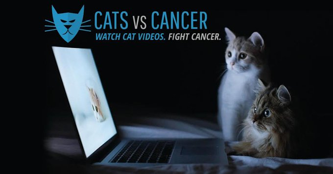 cats vs cancer photo