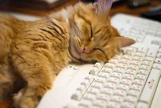 Orange cat sleeping on a computer keyboard.