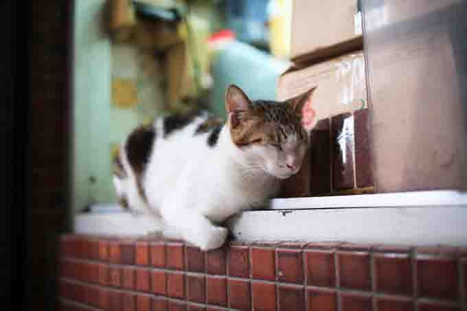 Cat sleeps in restaurant.