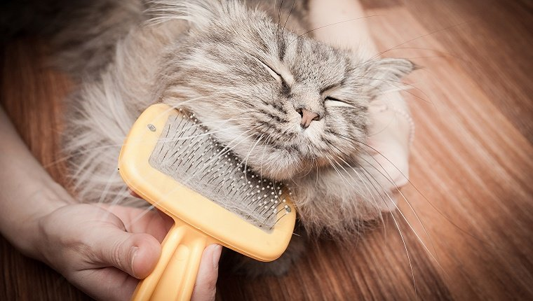 A cat looks content with his eyes closed while a person brushes the fur underneath his chin.