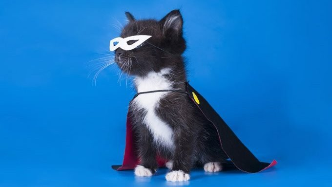 kitten with cape and mask