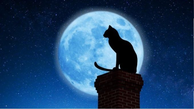 cat on chimney in front of moon