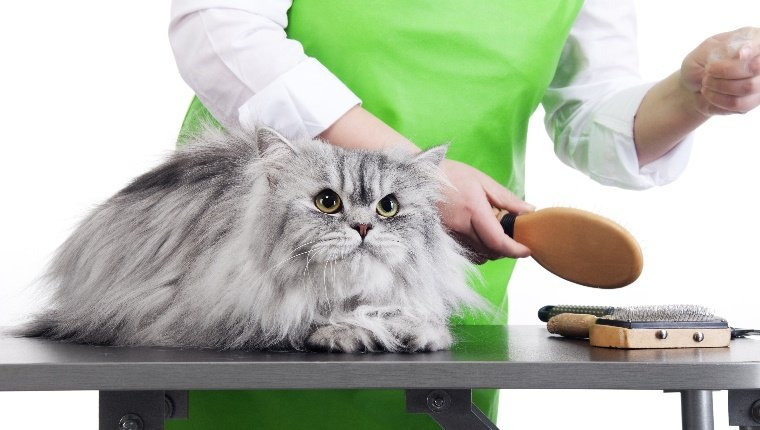 A long-haired cat lies on a table while a person picks up a brush from an assortment of grooming devices.