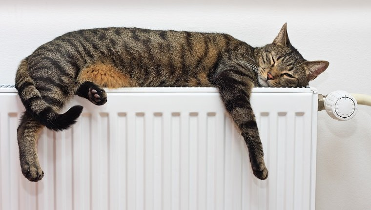 A black and grey striped cat sleeps on a radiator.