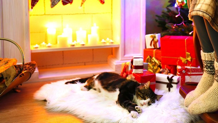 A cat sleeps on a white rug in front of a fireplace lit with candles and gifts under a Christmas tree. Do cats hibernate in winter?
