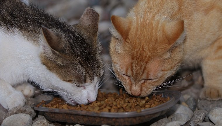 Two feral cats eat cat food from a small bowl.