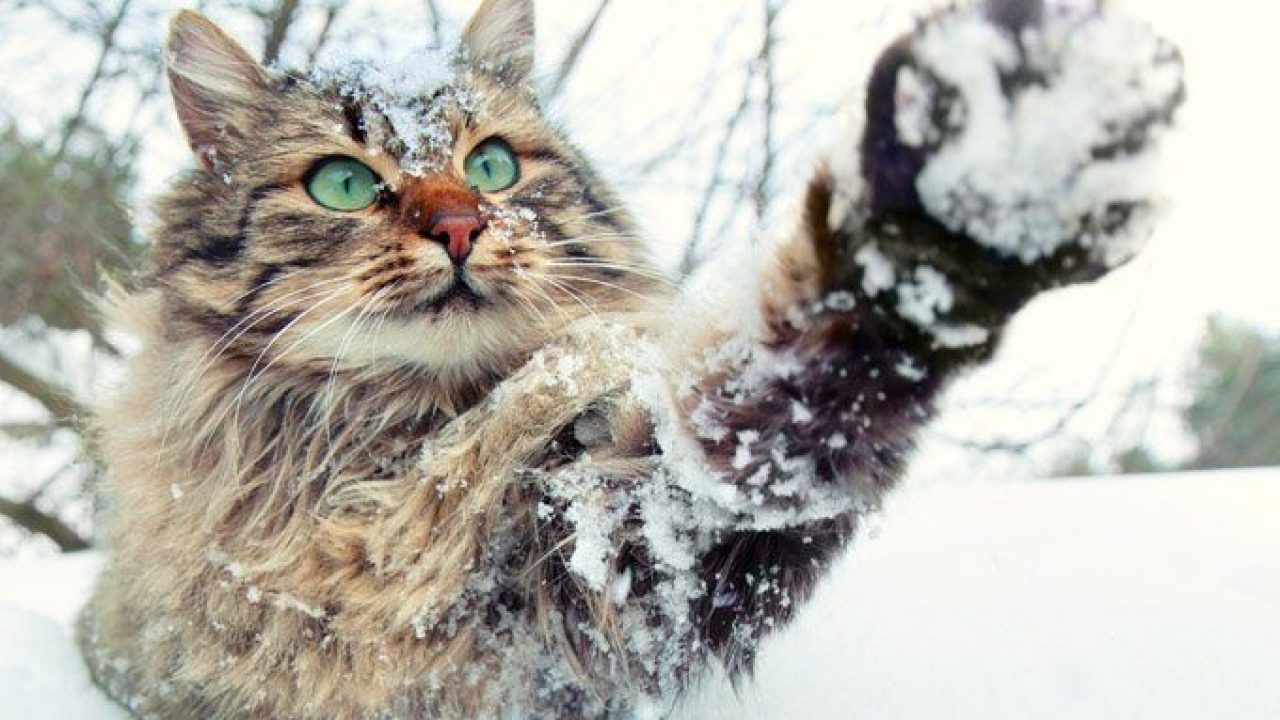 Let's Talk About Ways To Keep Outdoor And Feral Cats Safe In The Winter -  CatTime
