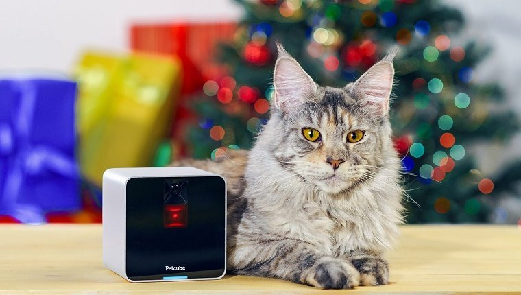 A cat sits in front of a Christmas tree next to a box-shaped camera.