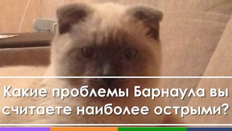 "A Scottish Fold sits with Russian writing that loosely translates to, ""What issue do you think should be solved first?"""
