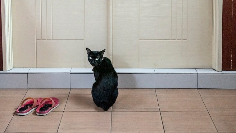 Cat waiting by the door - Malaysia