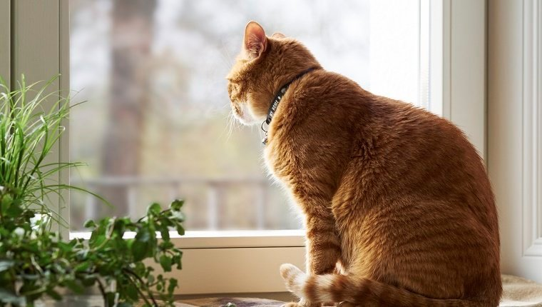 A cat sits on a window sill with a collar around its neck.