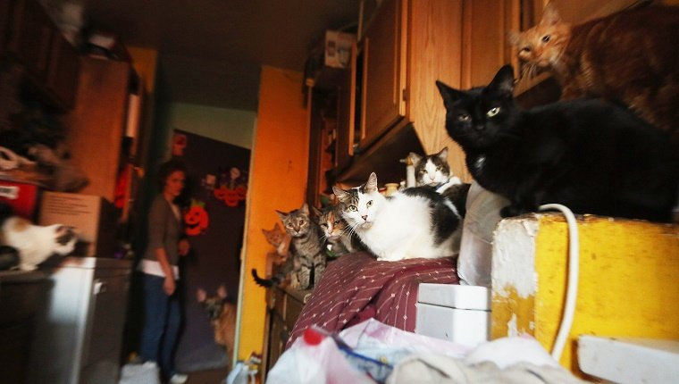 Several cats huddle in a laundry room during a storm.