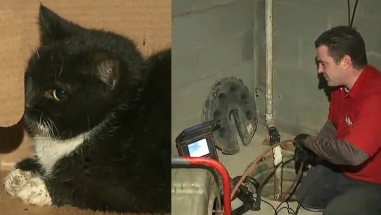 On the left is a small black and white kitten in a box. On the right, a plumber uses a camera tool to search pipes.