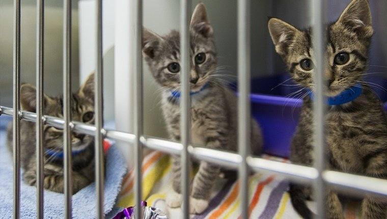 Several kittens sit in a cage at an animal shelter.