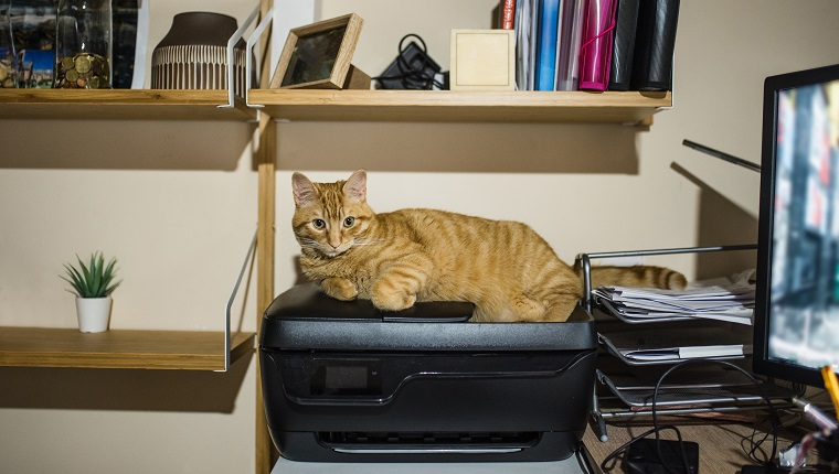 A cat lying on a printer in a desk / office area at home