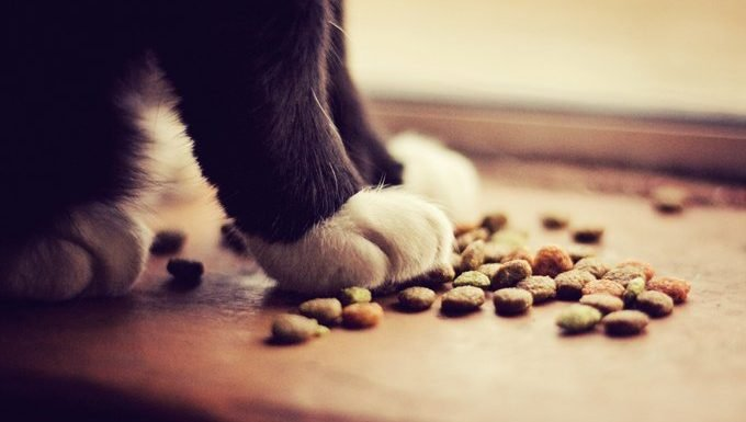 cat with paws on food