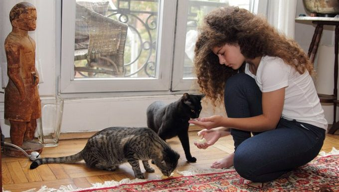 young woman feeds cats