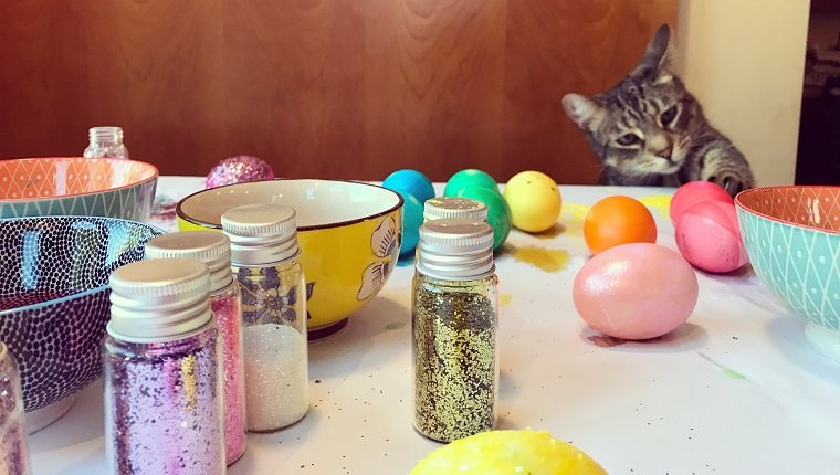 Frisky and mischievous cat reaching out to touch Easter eggs on a table. Little bowls filled with dye and colorful Easter eggs decorated in a rainbow of colors. Tiny jars of sparkling glitter scattered across the messy table. Childhood.