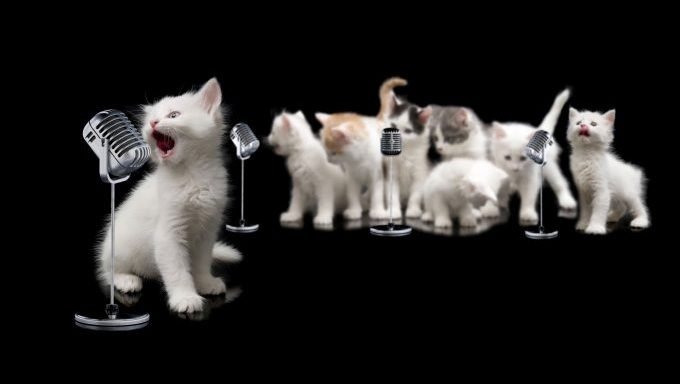 kittens singing songs about cats into microphones