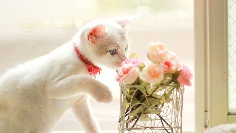 Kitten and flower.