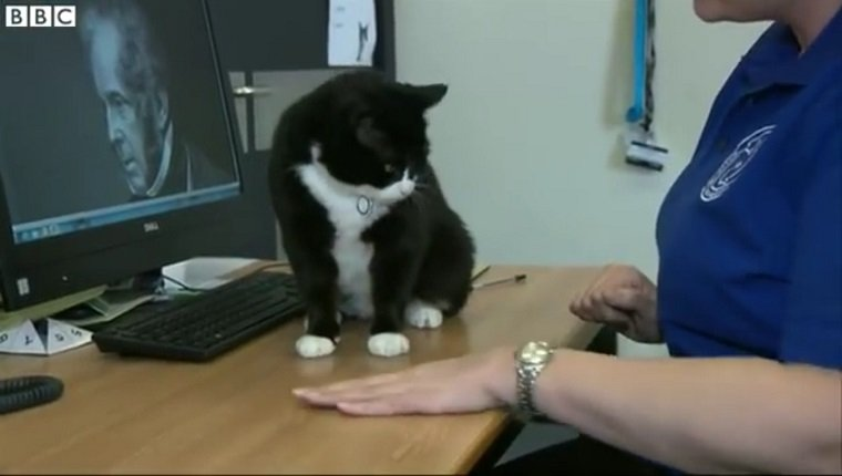 cat-chief-mouser-british-foreign-affairs-palmerston