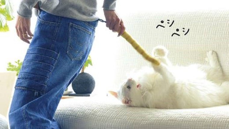 A white cat plays with the detachable tail on the jeans.