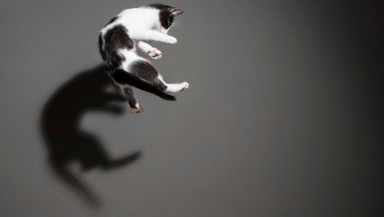 Cats flying and jumping trough the air