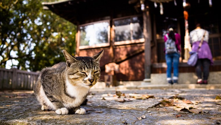 A stray cat lies in front of a Japanese shrine with worshippers in the background.