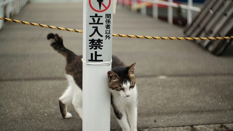 Stray Cat By White Pole With Warning Sign Japanese Text