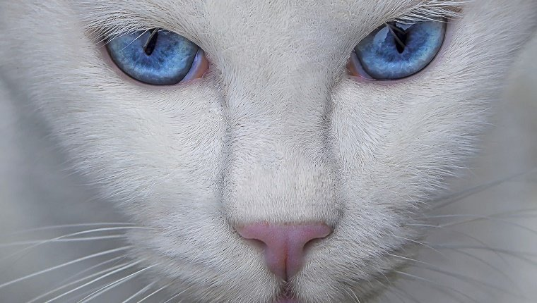 Cat Vision Everything You Need To Know About Your Cat S Eyes Cattime